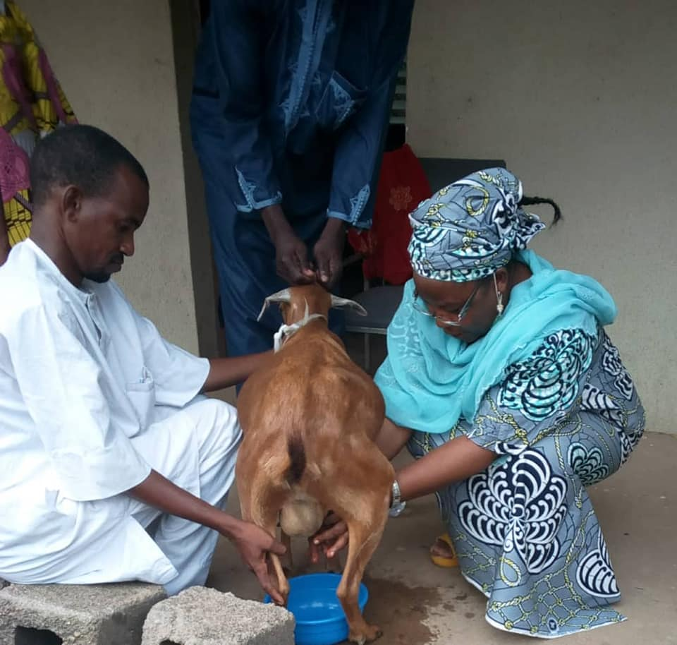 During the training, women were taught how to improve the health and reproductivity capacity of their goats.