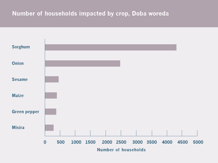 In Doba, the impact on sorghum and onion production will affect more than 6,700 households.